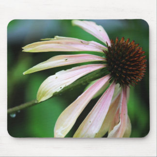 Close Up Summer Coneflower Mouse Pad