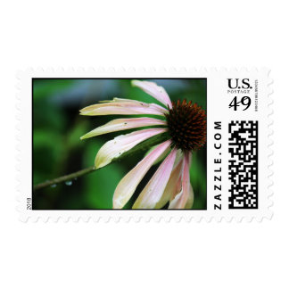 Close Up Summer Coneflower Stamp