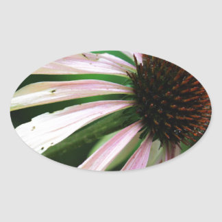 Close Up Summer Coneflower Sticker