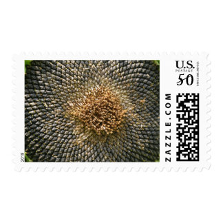 Close-Up Sunflower Seeds Postage Stamps