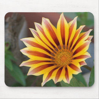 Close Up Tiger Gazania in Red, Gold and Green Mouse Pads