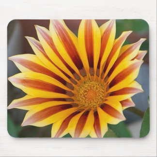 Close Up Tiger Gazania in Red, Gold and Green Mouse Pad