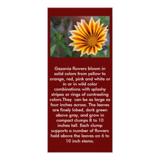 Close Up Tiger Gazania in Red, Gold and Green Rack Card