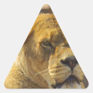 Close_Up_Tiger.jpg Triangle Sticker
