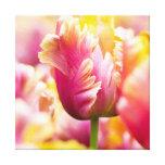 Close-up Tulips Canvas Print