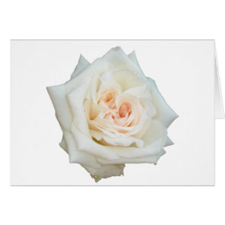 Close Up View Of A Beautiful White Rose Isolated Card