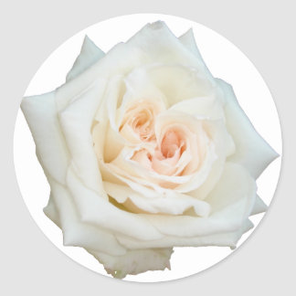 Close Up View Of A Beautiful White Rose Isolated Classic Round Sticker