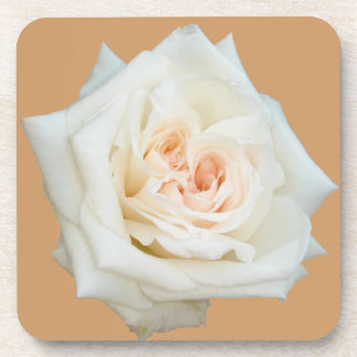Close Up View Of A Beautiful White Rose Isolated Drink Coasters