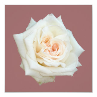 Close Up View Of A Beautiful White Rose Isolated Custom Invites