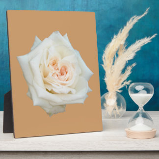 Close Up View Of A Beautiful White Rose Isolated Photo Plaques