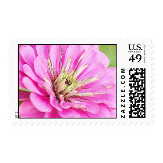 Close-up view of a delicate pink zinnia stamps