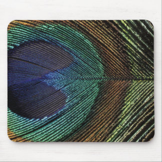 Close up view of eyespot on male peacock feather mousepads