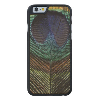 Close up view of eyespot on male peacock feather carved® maple iPhone 6 case