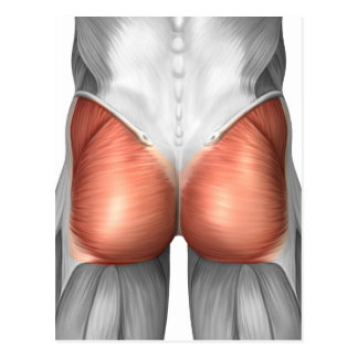 close_up_view_of_human_gluteal_muscles_postcard-rdad583ff4bf248f38e350a7130b51f49_vgbaq_8byvr_324.jpg