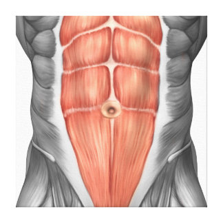 Close-Up View Of Male Abdominal Muscles Canvas Prints