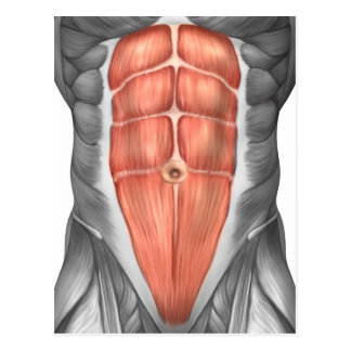 Close-Up View Of Male Abdominal Muscles Postcard