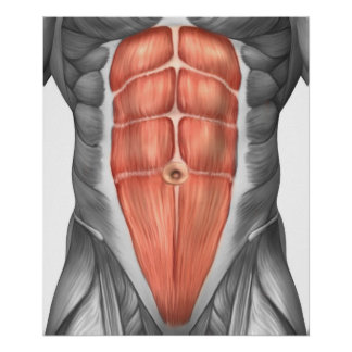 Close-Up View Of Male Abdominal Muscles Poster