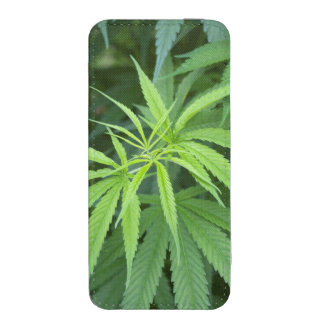Close-Up View Of Marijuana Plant, Malkerns iPhone SE/5/5s/5c Pouch