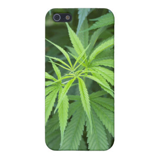 Close-Up View Of Marijuana Plant, Malkerns iPhone SE/5/5s Cover