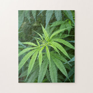 Close-Up View Of Marijuana Plant, Malkerns Jigsaw Puzzle