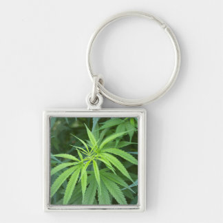 Close-Up View Of Marijuana Plant, Malkerns Keychain