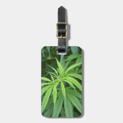 Close-Up View Of Marijuana Plant, Malkerns Luggage Tag