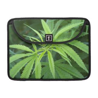 Close-Up View Of Marijuana Plant, Malkerns MacBook Pro Sleeves