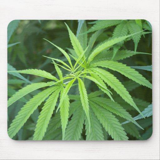 Close-Up View Of Marijuana Plant, Malkerns Mouse Pad