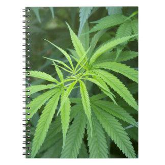 Close-Up View Of Marijuana Plant, Malkerns Spiral Notebook