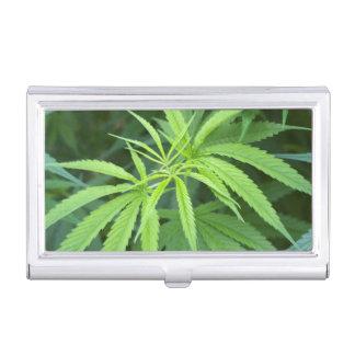 Close-Up View Of Marijuana Plant, Malkerns Business Card Holder