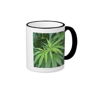 Close-Up View Of Marijuana Plant, Malkerns Ringer Mug