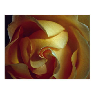 Close-up view of soft yellow rose postcard