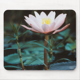 Close-Up view of Water Lily at Inle Lake Mouse Pad
