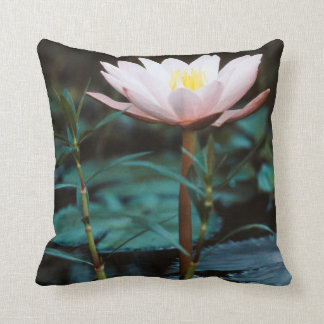 Close-Up view of Water Lily at Inle Lake Pillow