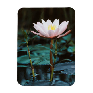 Close-Up view of Water Lily at Inle Lake Rectangular Photo Magnet