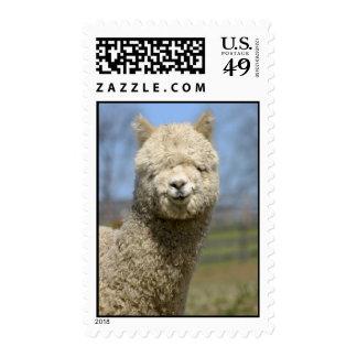 Close Up White Alpaca Stamp