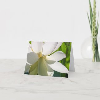 Close up White Lotus Folded Note Card