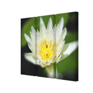 Close-up White Water Lily Flower and Bee 2 Canvas Print
