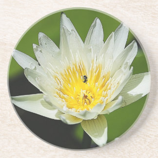 Close-up White Water Lily Flower and Bee Coaster