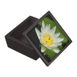 Close-up White Water Lily Flower and Bee Gift box