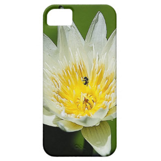 Close-up White Water Lily Flower and Bee iPhone SE/5/5s Case