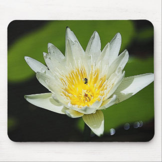 Close-up White Water Lily Flower and Bee Mouse Pad