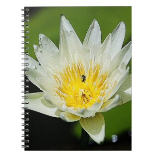 Close-up White Water Lily Flower and Bee Notebook