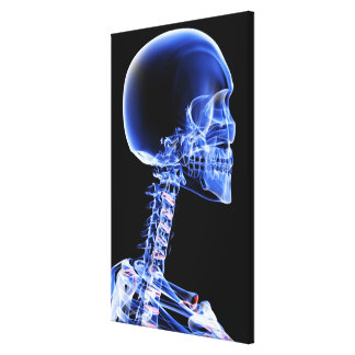 Close up x-ray of the bones in the neck canvas print