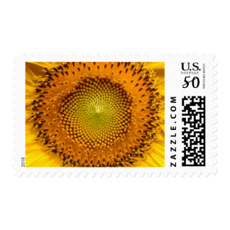 Close-up Yellow Sunflower Helianthus Floral Stamp