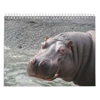 Close ups of wild animal faces 2014 calendar