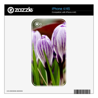 Closed Crocos Blue-White Striped Skins For iPhone 4S