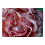 Closed Flower Greeting Cards