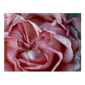 Closed Flower Postcard