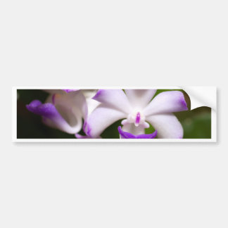 closed up  of Orchid Flower Bumper Sticker